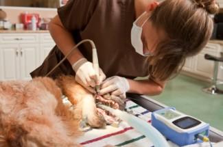 veterinary technician in ohio
