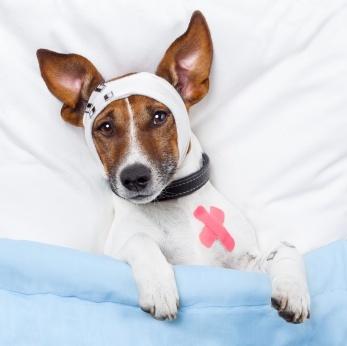 pet waiting for a vet tech