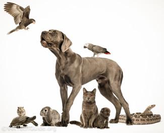 small animal care