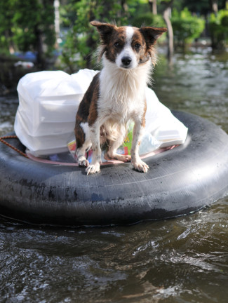 pets in a natural disaster
