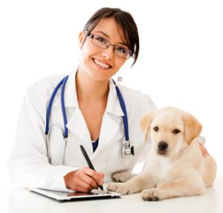 veterinarian aniamal career