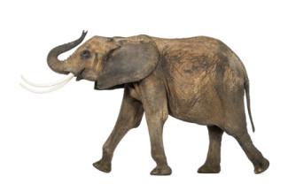 wildlife management animal career
