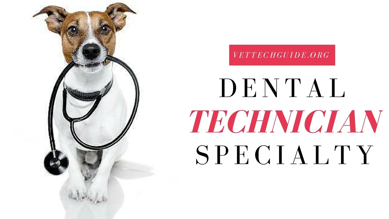 dental technician specialty