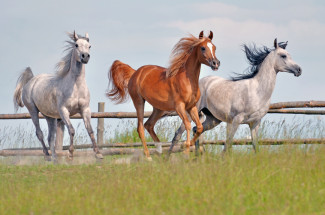 working with horses vettechguide org